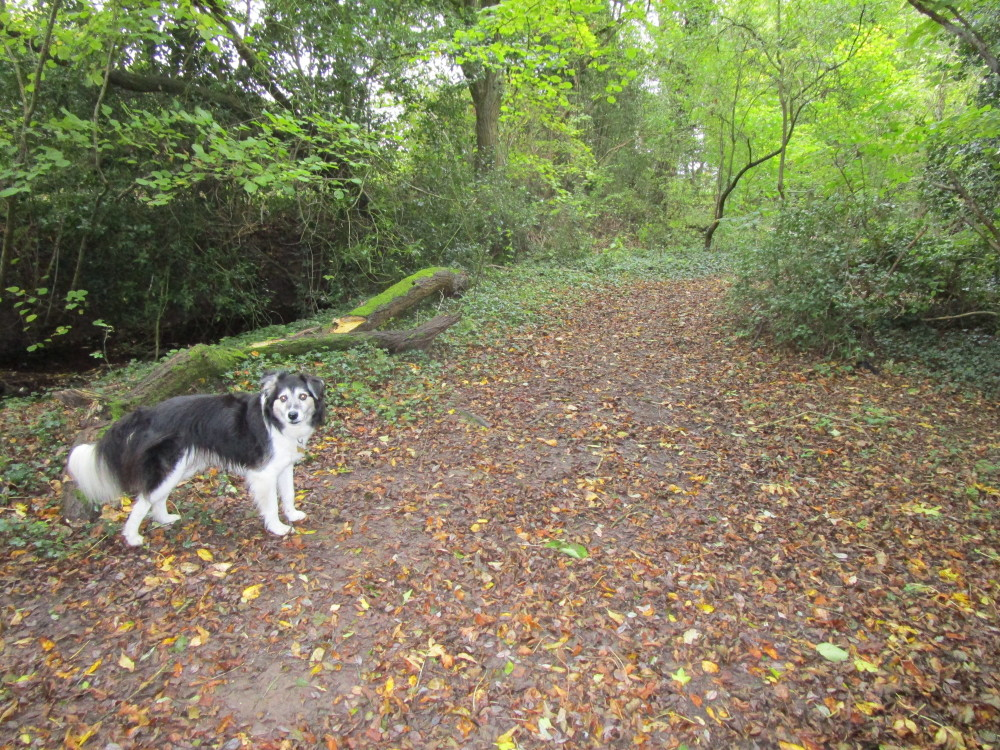 M42 Junction 3 dog-friendly pub and dog walk, Worcestershire - Dog walks in Worcestershire