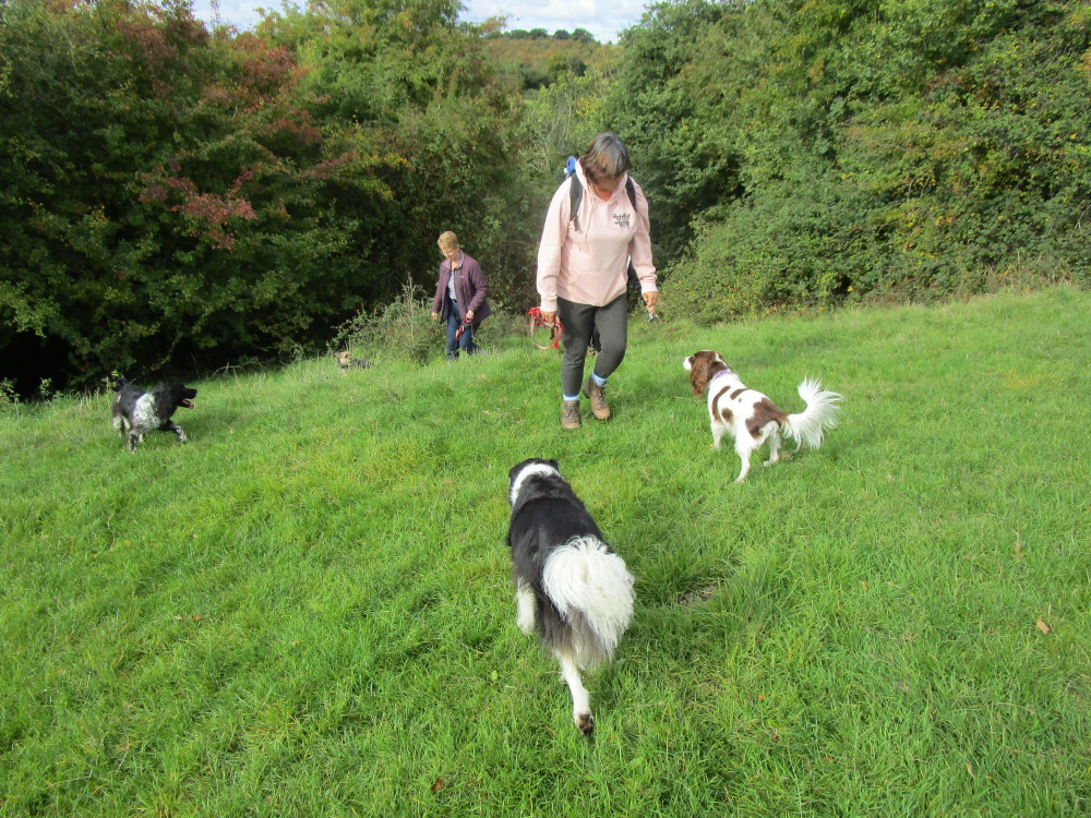 A449 near Driotwich dog-friendly pub and dog walk, Worcestershire - Dog walks in Worcestershire