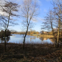 Redditch country park dog walk, Worcestershire - Dog walks in Worcestershire
