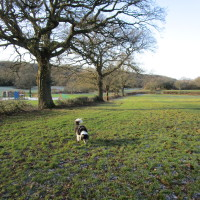 Morton Stanley Park, Redditch, Worcestershire - Dog walks in Worcestershire
