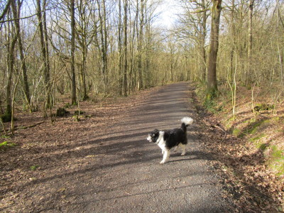 Pepper Woods, near Belbroughton, Worcestershire - Driving with Dogs