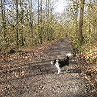 Pepper Woods, near Belbroughton, Worcestershire - Dog walks in Worcestershire