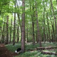 Coventry woodland dog walk, Warwickshire - Dog walks in Warwickshire