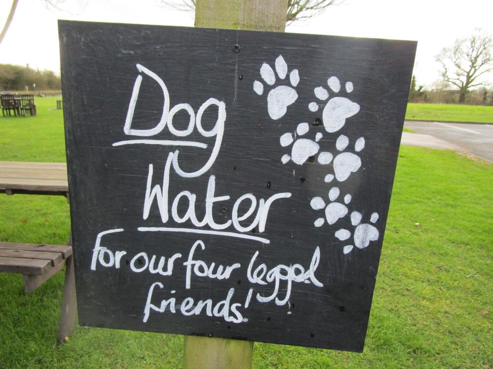 Solihull dog-friendly pub and dog walk, West Midlands - Dog walks in the West Midlands