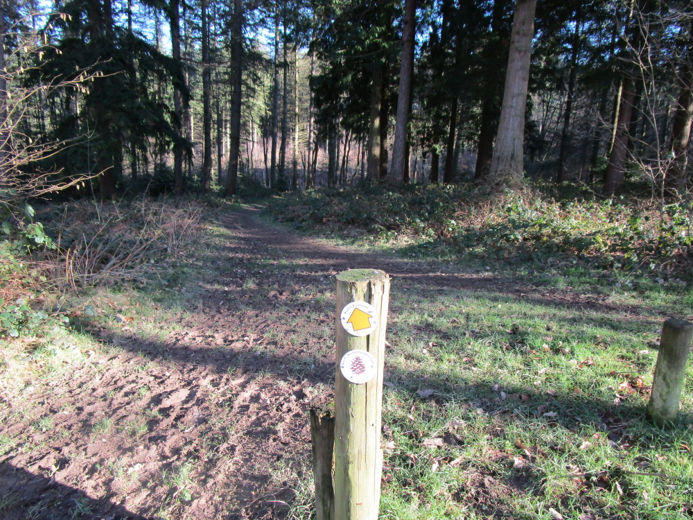 Woodland dog walks near Shatterford, Worcestershire - Dog walks in Worcestershire