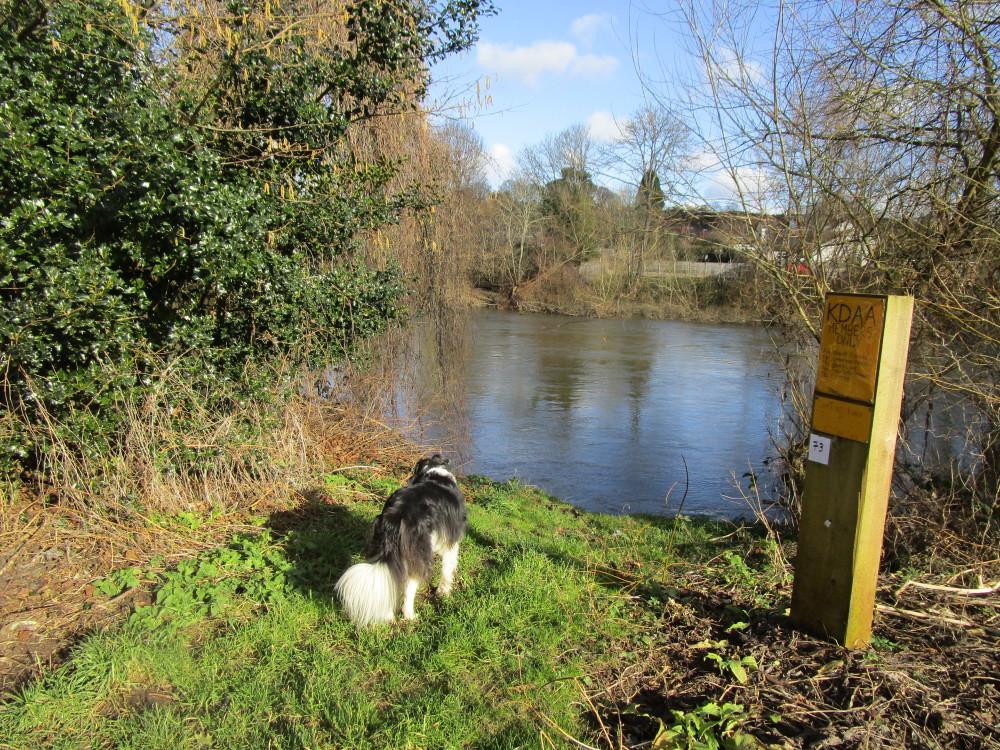 A456 dog walk near Bewdley, Worcestershire - Dog walks in Worcestershire