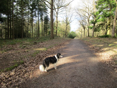 Woodland dog walk, Worcestershire - Driving with Dogs