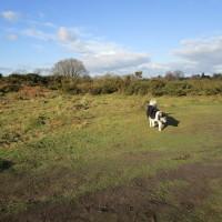 Hartlebury Common dog walk, Worcestershire - Dog walks in Worcestershire