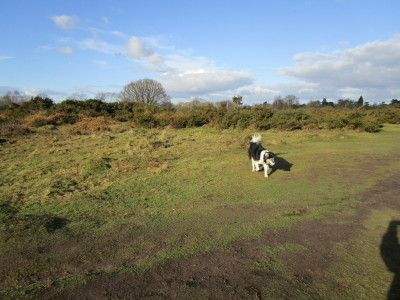 Hartlebury Common dog walk, Worcestershire - Driving with Dogs