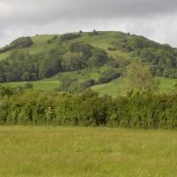Sedgemoor Services dog walk, Somerset - Dog walks in Somerset