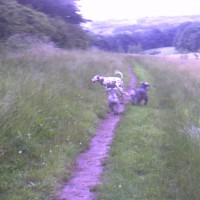 M6 Junction 26 Beacon Country Park dog walk, Lancashire - Dog walks in Lancashire