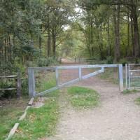 Pluckley pub with a woodland dog walk, Kent - Kent dog walks and dog-friendly pubs