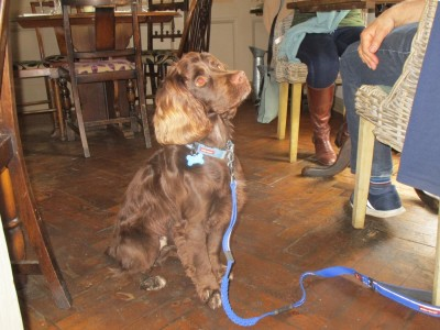 A281 Dog-friendly pub near Rudgwick, West Sussex - Driving with Dogs