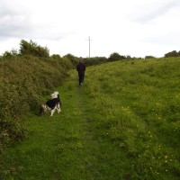 M5 Junction 23 dog-friendly pub and dog walk in Bawdrip, Somerset