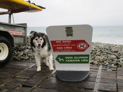 Newgale dog-friendly beach, Wales - Driving with Dogs