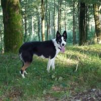 Mabie Forest dog walk, Scotland - Dog walks in Scotland