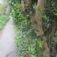 A27 Ancient tracks and dog-friendly pub near Lewes, East Sussex - Sussex dog-friendly pub and dog walk.JPG