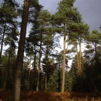 Forest Centre full day dog walks, Yorkshire - 1200px-Dalby_Forest.jpg