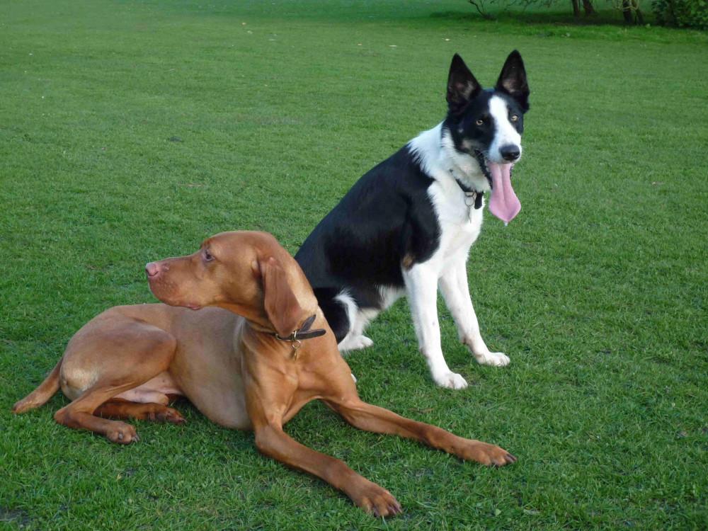 Bulwell Hall Park, Nottinghamshire - Dog walks in Nottinghamshire