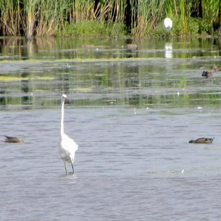 Wetlands dog walk and bird watching, Somerset - nature reserve dog walk.jpg