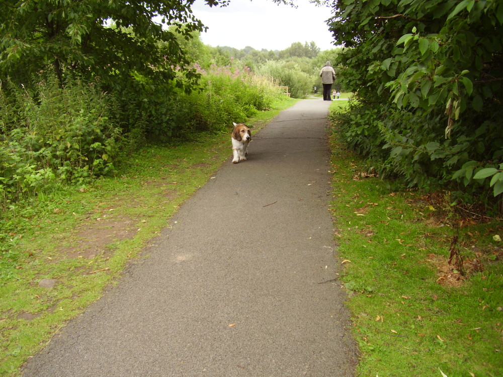 Dog walk in a valley near Wrexham, Wales - Dog walks in Wales