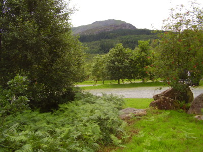 Forest dog walk, Gwynedd, Wales - Driving with Dogs