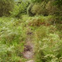 Forest dog walk, Gwynedd, Wales - Dog walks in Wales