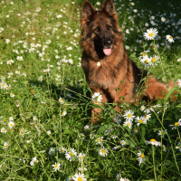 Quantock Cottages - dog-friendly, Somerset - 9j.jpg