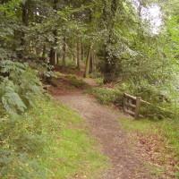 Dog walk near Aberystwyth, Ceredigion, Wales - Dog walks in Wales