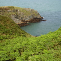 Anglesey dog-friendly beach and walk, Wales - Dog walks in Wales