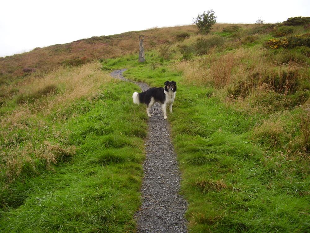 A44 dog walk near Aberystwyth, Ceredigion, Wales - Dog walks in Wales