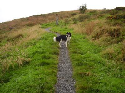 A44 dog walk near Aberystwyth, Ceredigion, Wales - Driving with Dogs