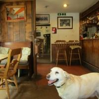 M5 Jct 28 dog-friendly pub with B&B, Devon - Devon dog walk and dog-friendly pub.JPG