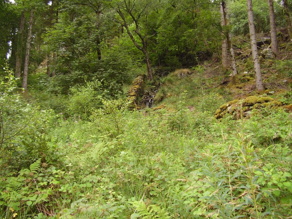 Forest dog walk near Dolgellau, Gwynedd, Wales - Dog walks in Wales