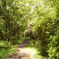 M5 Junction 28 dog walk and dog-friendly pub, Devon - Dog walks in Devon