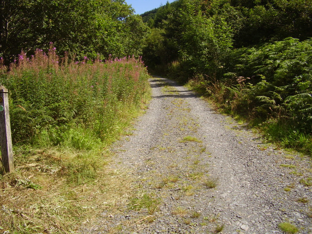 Corris dog walk, Gwynedd, Wales - Dog walks in Wales
