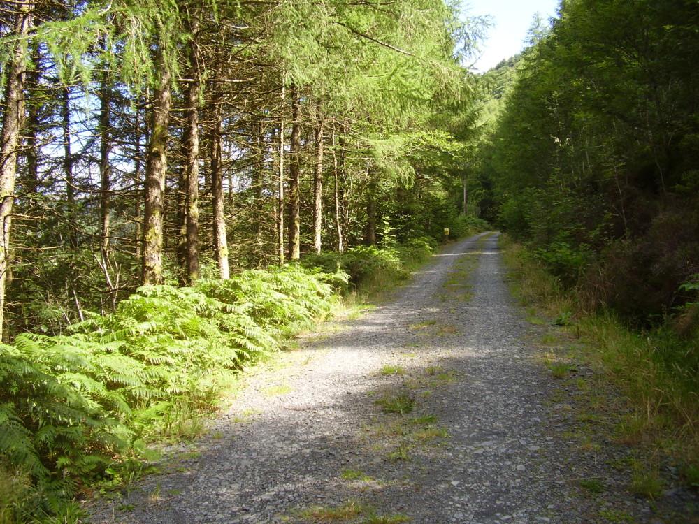 Corris dog walk, Gwynedd, Wales - Dog walks in Wales