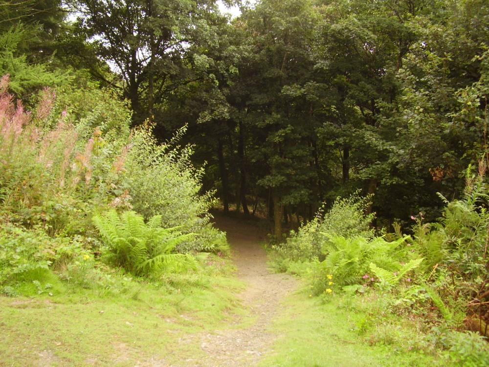 A487 dog walk near Aberystwyth, Ceredigion, Wales - Dog walks in Wales