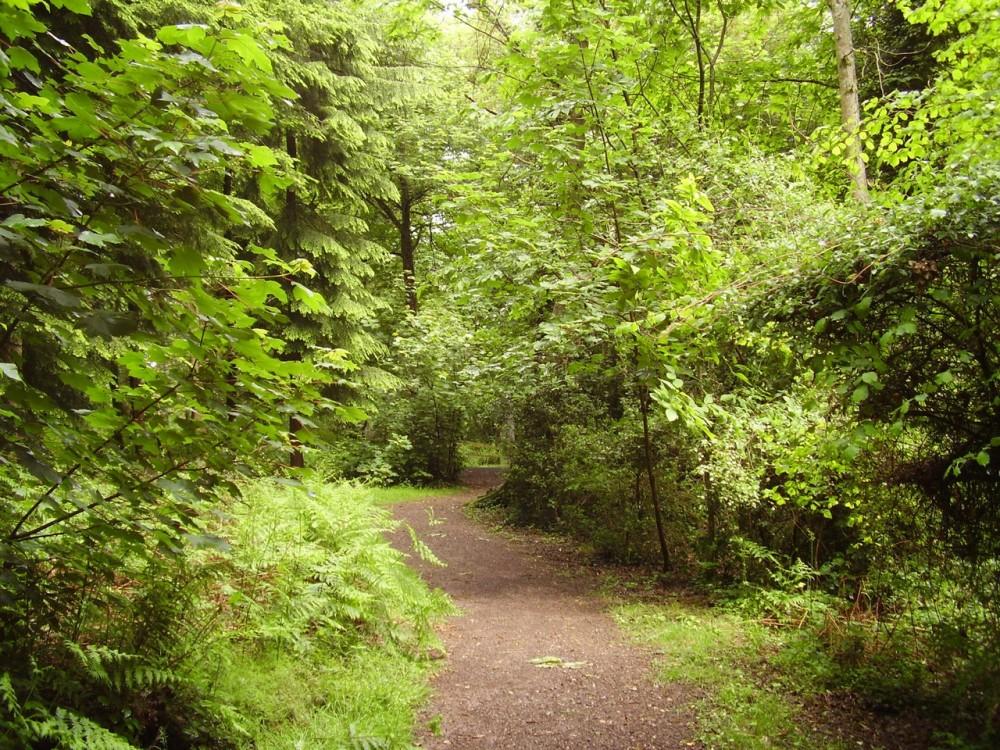 M5 Junction 29 forest dog walk, Devon - Dog walks in Devon