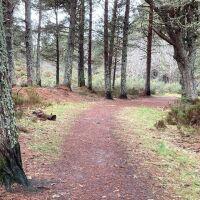 Tain Hill dog walk, Scotland - Tain 2.jpg