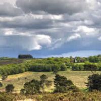 A22 Forest dog walk near Uckfield, East Sussex - Sussex dog walk