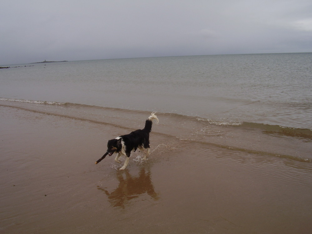 Moelfre dog-friendly beach, Anglesey, Wales - Dog walks in Wales