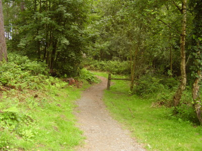 Anglesey forest dog walk, Wales - Driving with Dogs