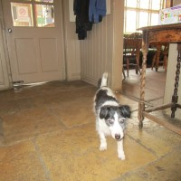 A272 dog-friendly pub and dog walk near Cowfold, West Sussex - Dog-friendly pub with dog walk Sussex.JPG
