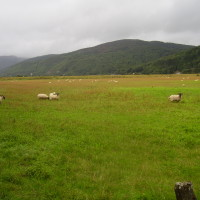 Dog walk near Dolgellau, Wales - Dog walks in Wales