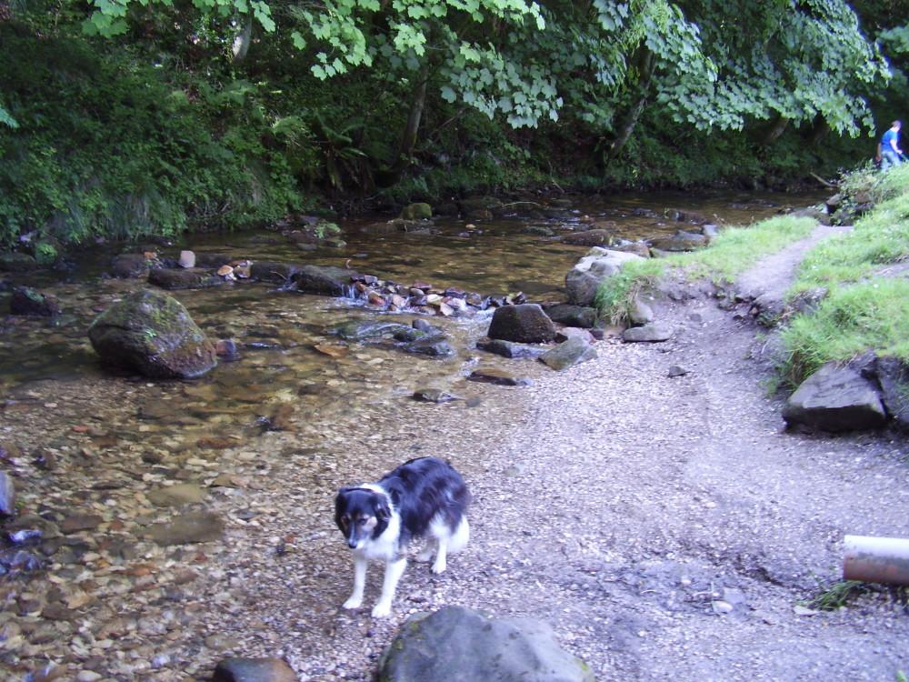 Nant dog walk near Wrexham, Wales - Dog walks in Wales