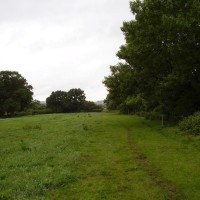 M5 Junction 30 dog walk from Clyst St Mary, Devon - Dog walks in Devon