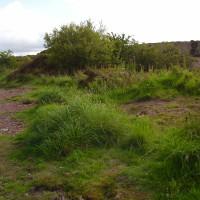 Dog walk near Amlwch, Anglesey, Wales - Dog walks in Wales