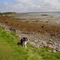 A5 dog walk near Penrhos, Anglesey, Wales - Dog walks in Wales