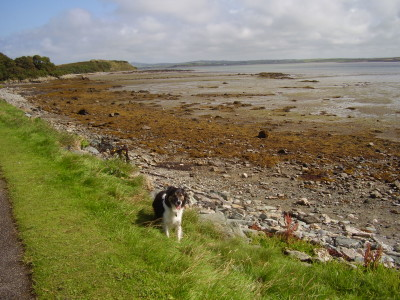 A5 dog walk near Penrhos, Anglesey, Wales - Driving with Dogs